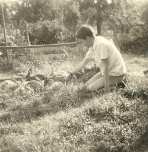 meine ersten Kaninchen